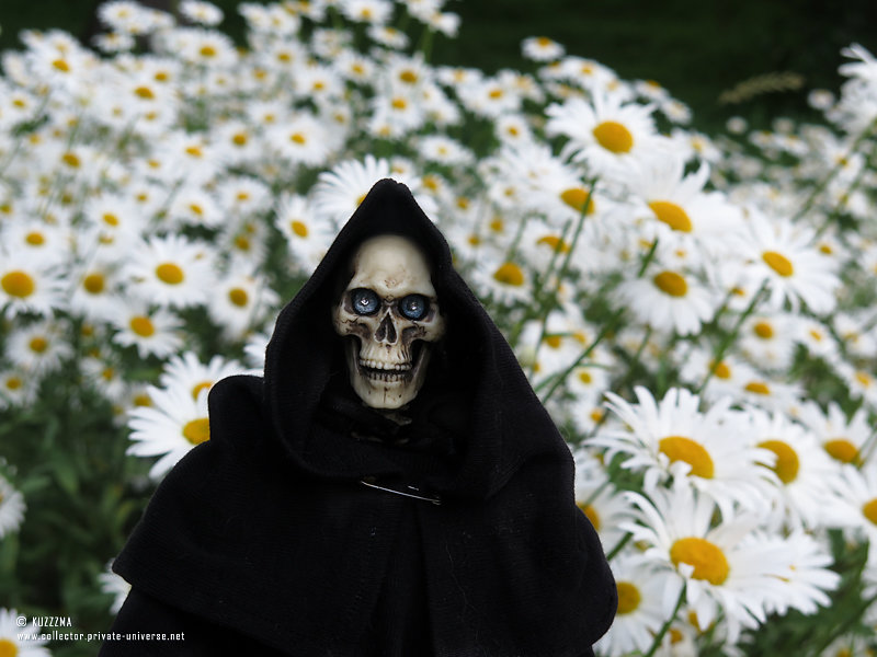 Death | Field of daisies